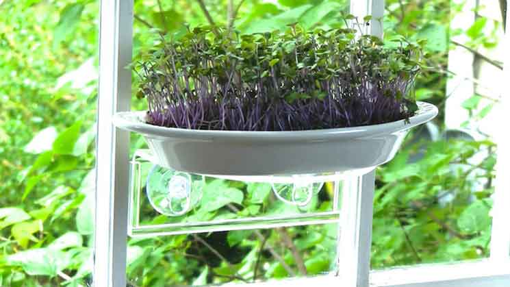 "MicroGreenz uses a ""Veg-Ledge"" to turn your window into a tiny garden space"