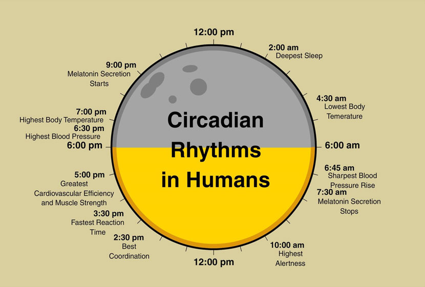 circadian-rhytm-explained